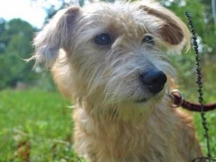 BIANKA - mała  kochana sunia w typie terriera szuka domu   wielkopolskie Poznań