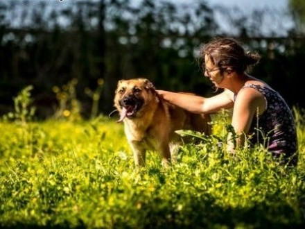 Lunes- przystojnyn psi kawaler do wzięcia od zaraz   lubelskie Lublin