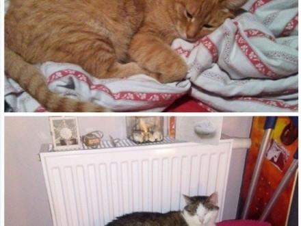 Dwa starsze koty pilnie szukają domu!