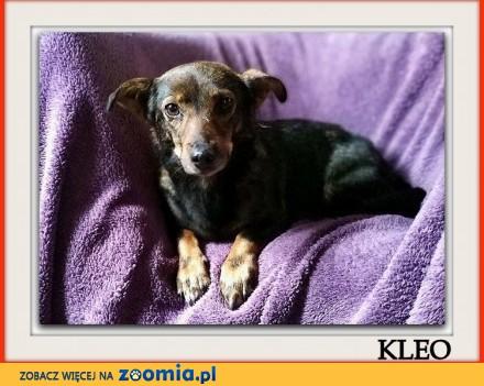 Mała 7 kg przyjazna przytulaśna łagodna sterylizowana suczka KLEO_Adopcja_