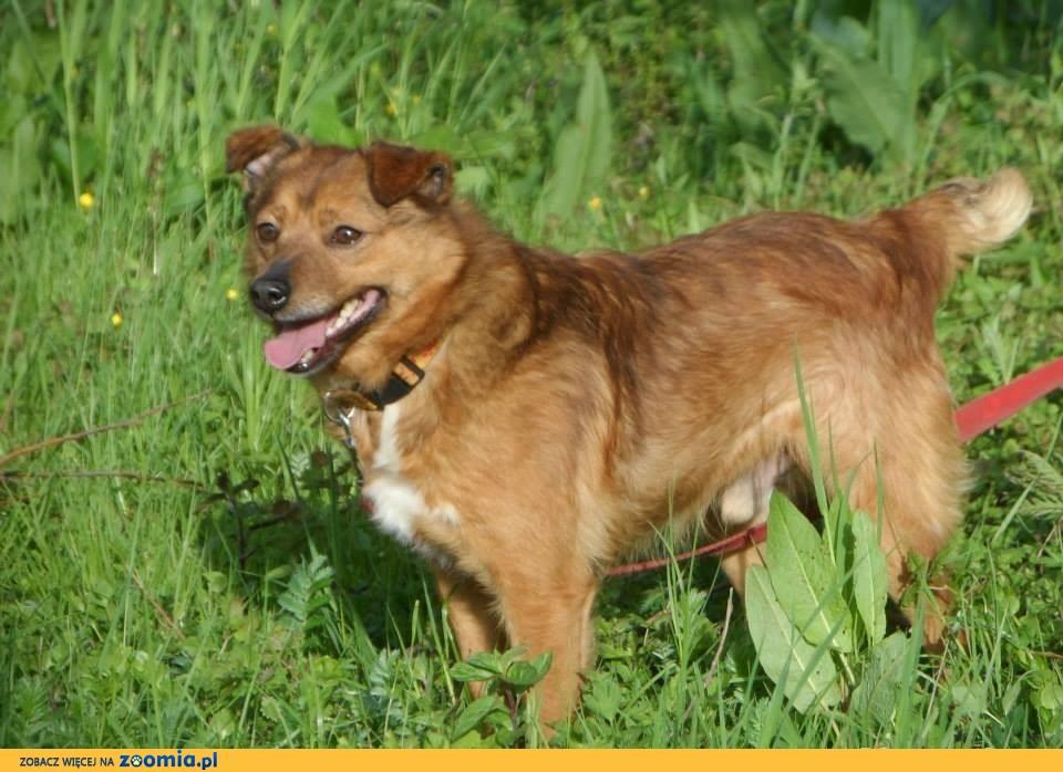Borysek mały, blokowy psi przyjaciel do adopcji