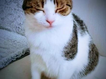 Dorosła kotka spoza fundacji szuka domu