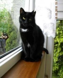 Hebanowa  piękna 1 5 roczna koteczka tęskni za domkiem   łódzkie Łódź