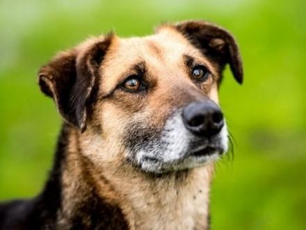 TOLIK - oto pies  który dla szczęścia człowieka stworzony jest!   świętokrzyskie Kielce