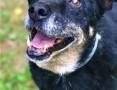 'KABANOS - pies wyjątkowy, kocha ludzi, dzieci do adopcji,  mazowieckie Warszawa