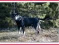 Średni 17 kg,łagodny,tulaśny,przesympatyczny,szczepiony piesek DOBEK_Adopcja_