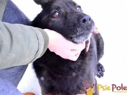 KUFELEK-wesoły, super kochany psiak szuka troskliwego domu, adopcja