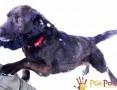'KUFELEK-wesoły, super kochany psiak szuka troskliwego domu, adopcja