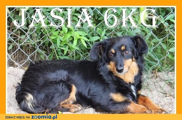 Jasia-mała 6kg,młodziutka,łagodna,grzeczna suczka długowłosa.ADOPCJA