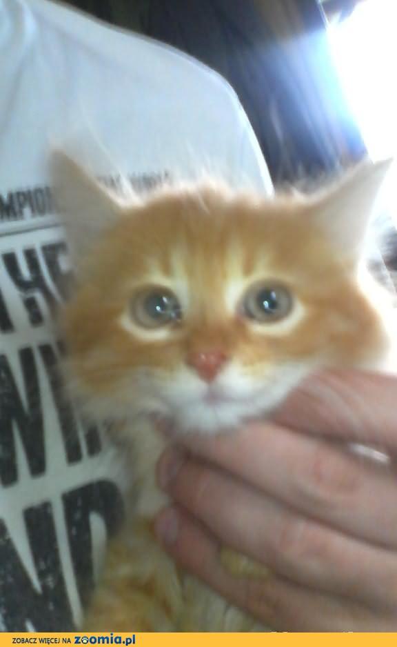 Puchate kocięta do adopcji