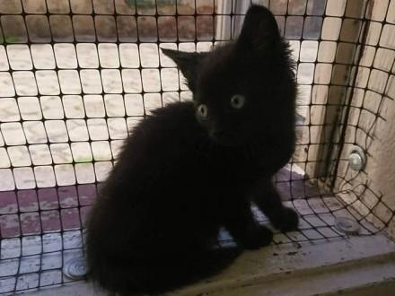 Koteczka Mamba szuka domu