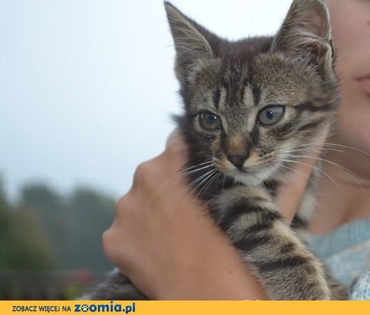 Leopold, porzucony uroczy kociak szuka domu!