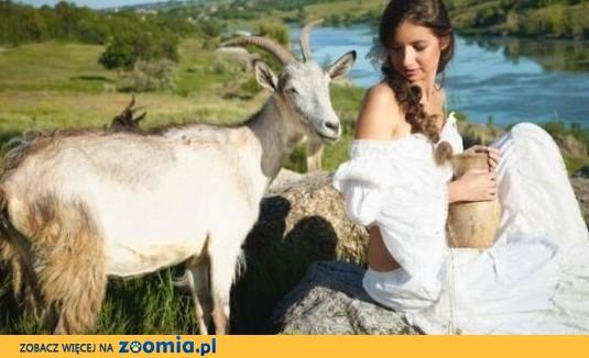 Ukraina. Stada krow, owiec, koz 4 zl/kg.