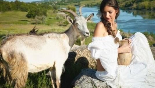 Ukraina Stada krow  owiec  koz 4 zl/kg