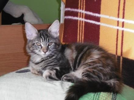 Piękna Kicia i Kotuś MCO