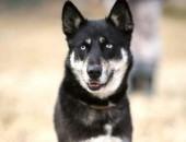 Etna - przyjaciółka w typie husky :)