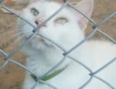 Biały, domowy kot czeka w schronisku na nowy dom!