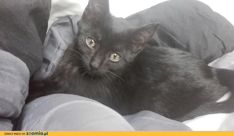 Pumka, przepiękna, 3 miesięczna kotka szuka domu!