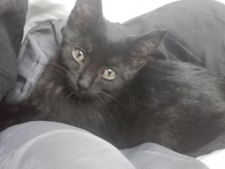 Pumka  przepiękna  3 miesięczna kotka szuka domu!