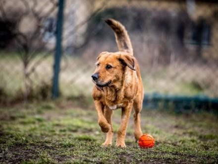 Pies jest jedynym stworzeniem na ziemi  które kocha cię więcej niż siebie samego - LEJLA!