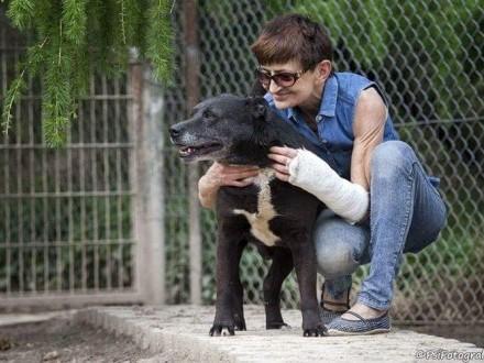 Czarny  niekonfliktowy  delikatny pies szuka domu na zawsze!