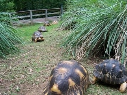 żółwie na sall