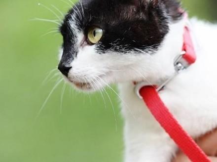 MUŃKA - wspaniała kotka gotowa do adopcji!