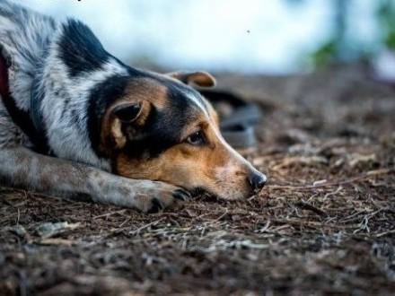 Samotny i bezdomny szuka kogoś na zawsze! GACEK,  mazowieckie Warszawa