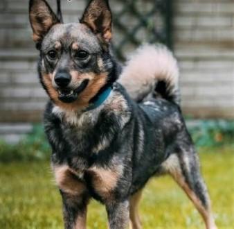 ARO - piękny psiak  porzucony na działkach szuka domu!   wielkopolskie Poznań