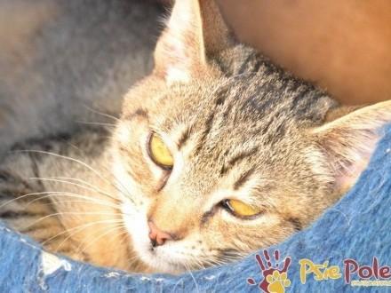 BENIU-niewielki  nieśmiały PIĘKNY kotek szuka troskliwego domu  ADOPCJA