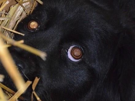 PAURA-śliczna  bardzo przestraszona sunia szuka dobrego domu  adopcja