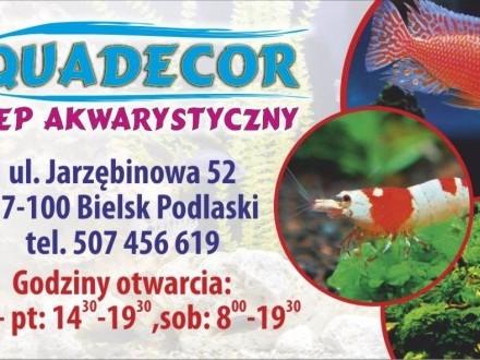 Ryby do akwarium sklep AQUADECOR