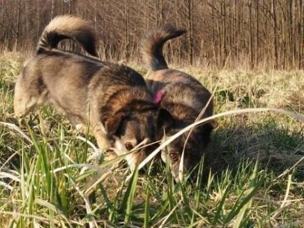 Szyszka i Grzybek nierozłączne wspaniałe psiaki szukają wspólnego domku na całe życie    Kundelki cała Polska