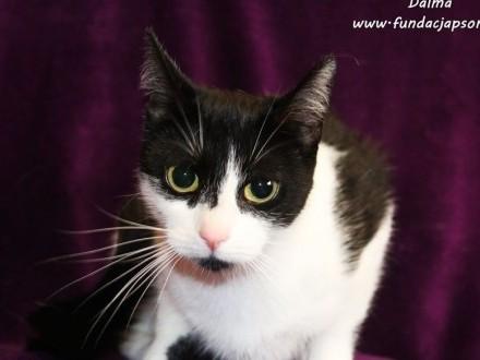 Dalma - biało - czarna kotka