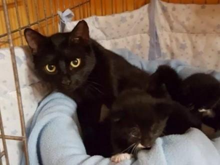 Młoda koteczka i jej synek ADOPCJA   Koty pospolite cała Polska