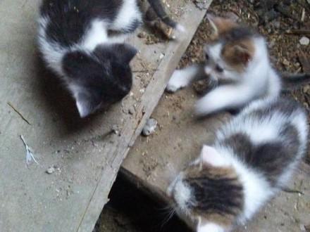 Poszukiwany wolontariusze  wolontariat dla miłośników zwierząt