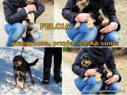Felcia przyjacielska sunia pilnie szuka domu    małopolskie Kraków