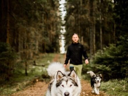 Szczeniaki alaskan malamute - rezerwacje na miot