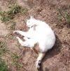 Zaginął kot Gryzak