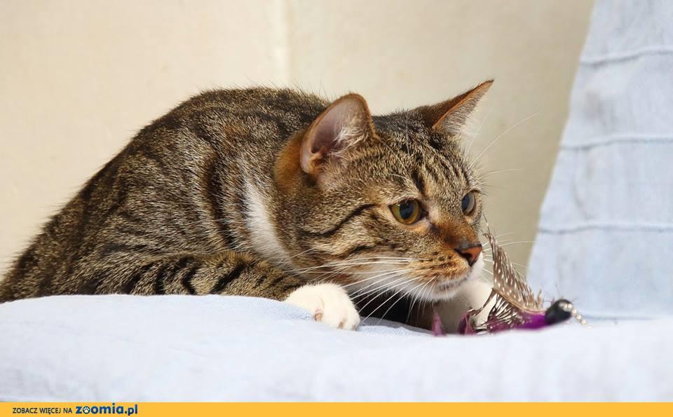 Koci ideał Maczek kocha ludzi!