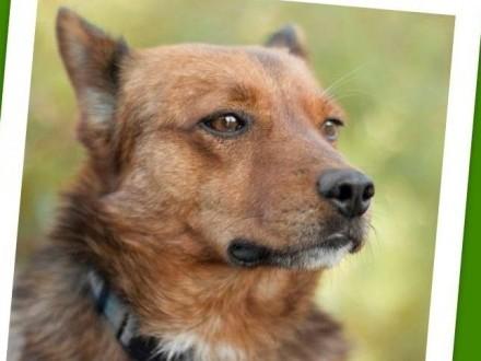12kg 3 lata radosny towarzyski kontaktowy pies SIMBA_Adopcja