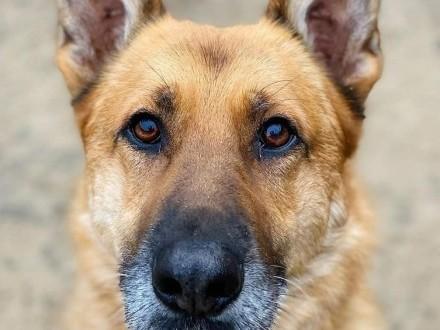 WALT cudowny psiak kochający ludzi marzy o domku gdzie zazna szczęścia i miłości