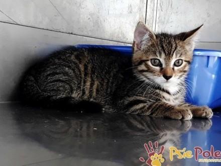 TANGELO-Super kochany  wspaniały  rewelacyjny kociak-12 tygodni-szukamy domu