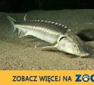 Ukraina.Wspolpraca.Produkcja jesiotra,hodowla ryb.