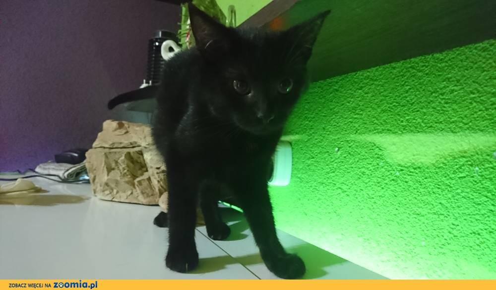 Mała koteczka Kira szuka domu