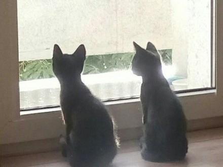 Kociaki: Perro i Pera szukają domów   łódzkie Łódź