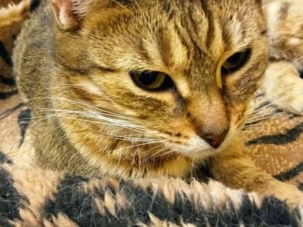 Fela - kochana kotka szuka nowej rodziny