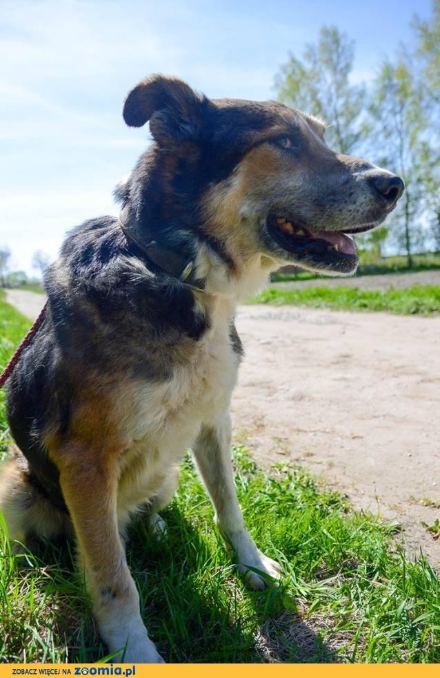 Karlos, spokojny i przyjazny, pokorny - psi weteran do adopcji!