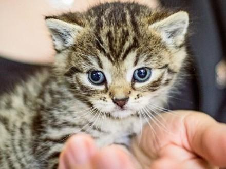 Śliczne małe kotki szukają domu
