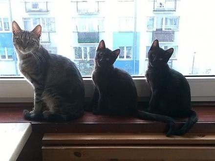 Dwie małe koteczki